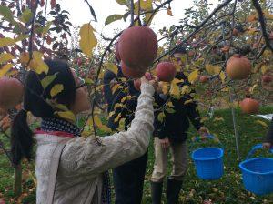 リンゴ狩りを体験したり