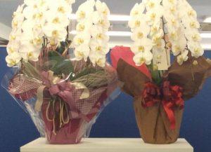 沢山のお花をありがとうございました!
